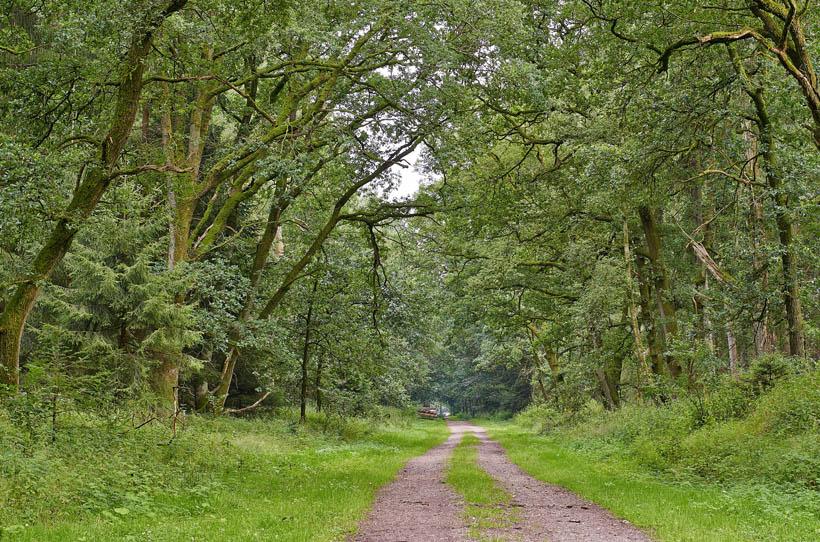 Spaziergang zum ErlebnisWald Trappenkamp