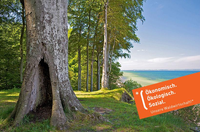Unsere Waldwirtschaft, Schleswig-Holsteinische Landesforsten