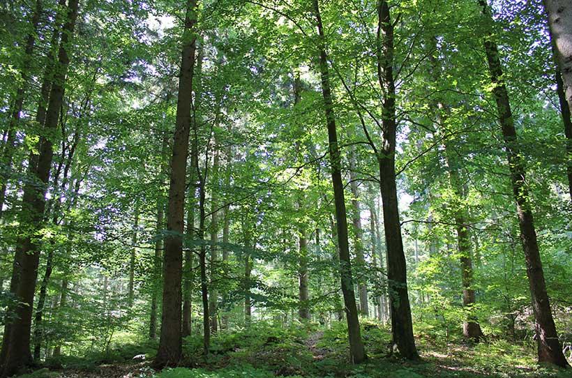 Tief im Wald, Schleswig-Holsteinische Landesforsten