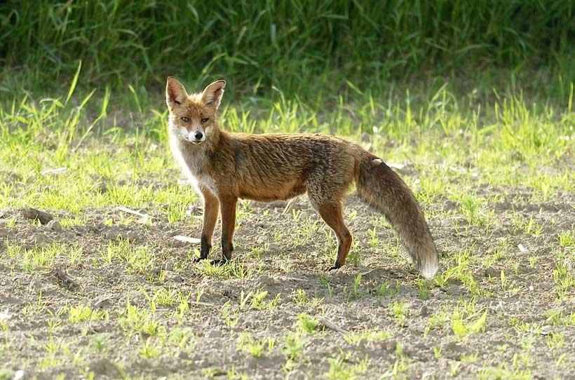 Für schlaue Füchse im Wald