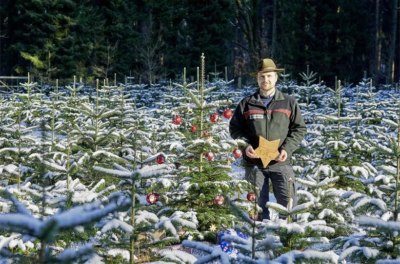 Förster mit Weihnachtsbaum
