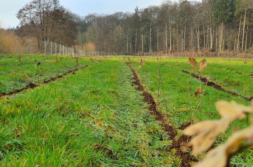 Die Schleswig-Holsteinischen Landesforsten forsten jährlich viele Hektar auf.