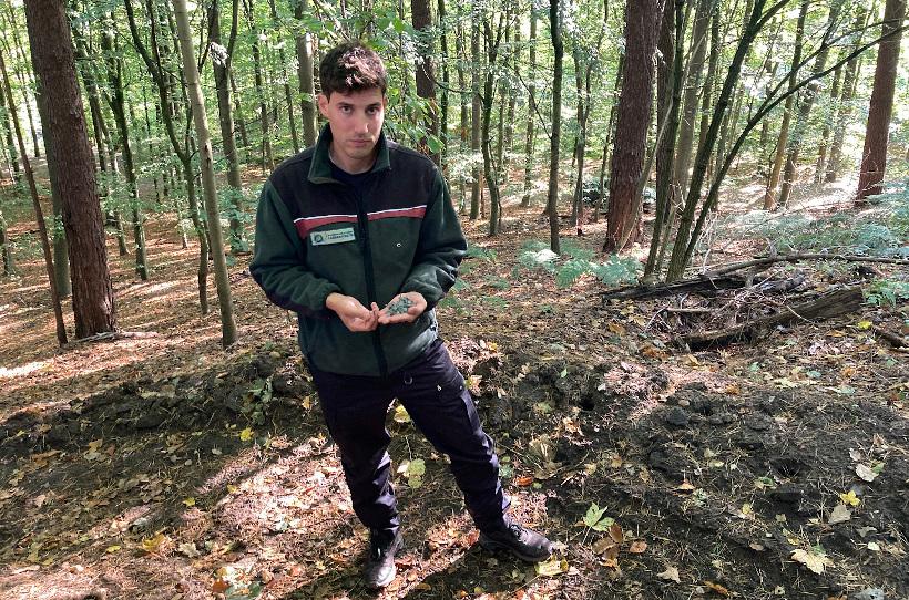 Dachpappnägel im Wald