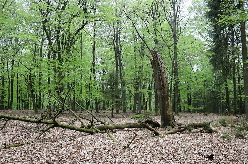 Ruhe im Wald, Schleswig-Holsteinische Landesforsten