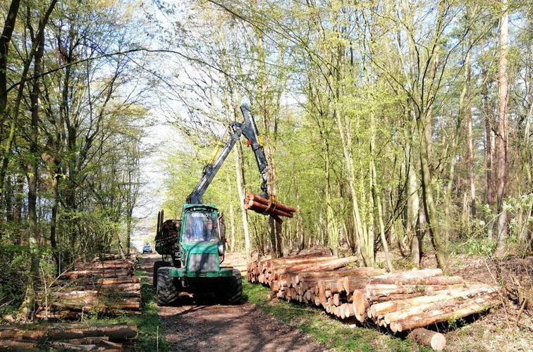 Holzernte in Pansdorf