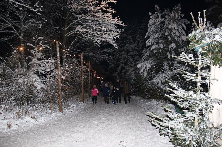 familienwanderung-durch-den-Weihnachtswald