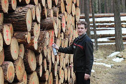 Holzpolter der Försterei Tangstedt