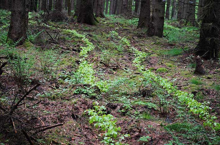 Wald für mehr. Zukunft
