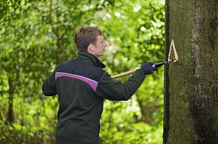 Auszeichnung eines Habitatbaumes, Schleswig-Holsteinische Landesforsten