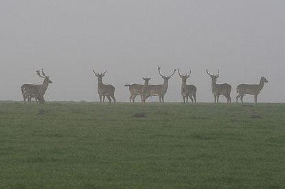Tiere im Nebel, Schleswig-Holsteinische Landesforsten