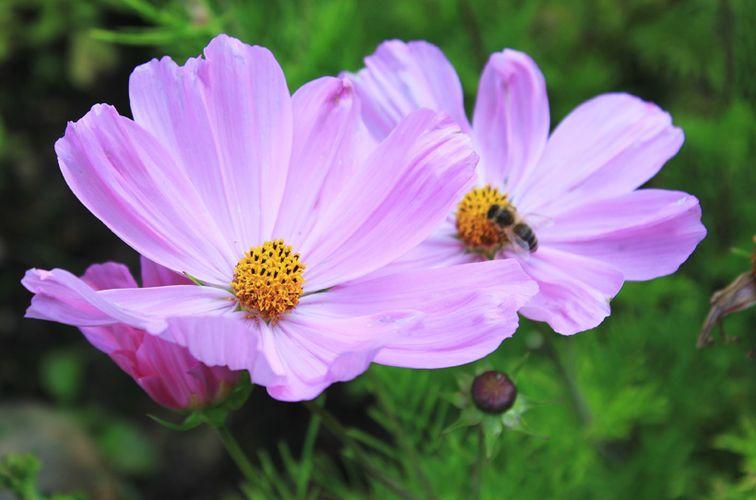 Waldpädagogikforum Blütenduft