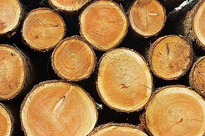 Holzpolter der Schleswig-Holsteinische Landesforsten