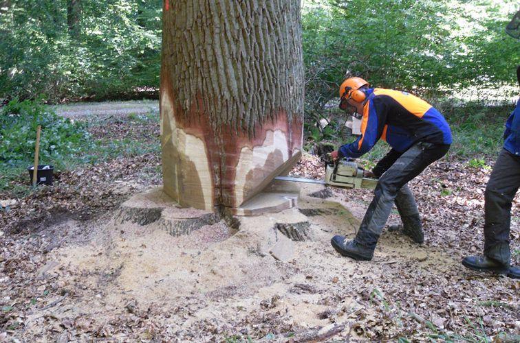 Holzfällerlager