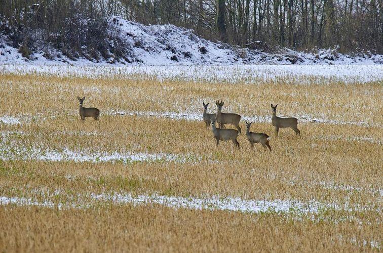 Familienwanderung im Winterwald