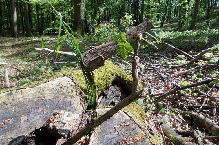 Fortbildung Erlebnis? Wald! Spontanspaß ohne was