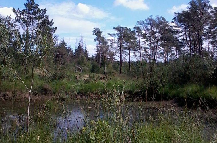 Heideweiher in Süderlügum