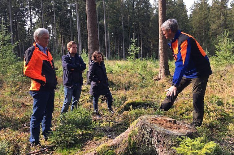 Zu Besuch in Schleswig-Holsteins Wäldern