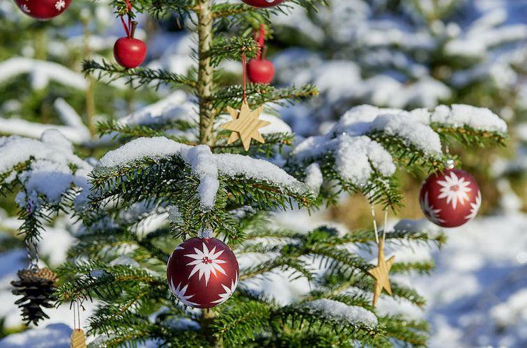 Weihnachtsbaumverkauf im ErlebnisWald Trappenkamp