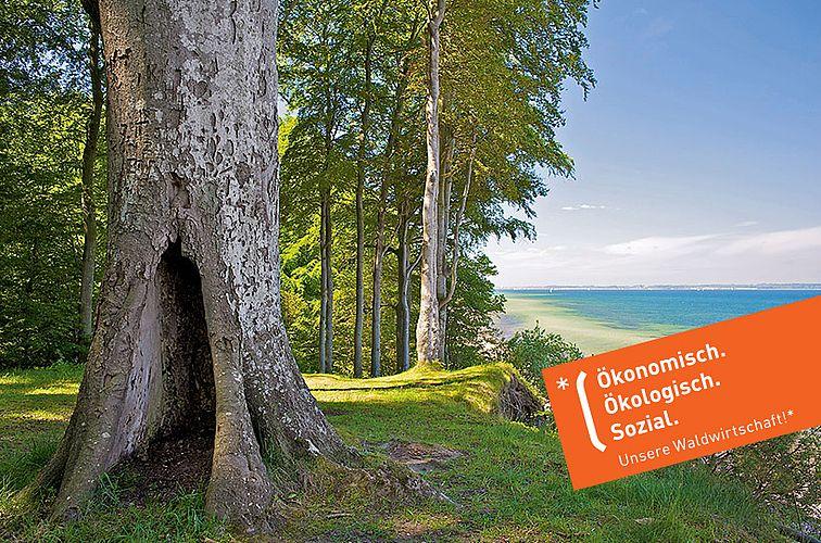 Unsere Waldwirtschaft | Kampagne der Schleswig-Holsteinischen Landesforsten